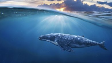 تصویر از نهنگهای اتریوم در حال جمع کردن اتر هستند!