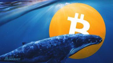 تصویر از نهنگها علاقهای به فروش بیت کوین در قیمتهای فعلی ندارند